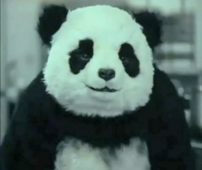 mbs-panda